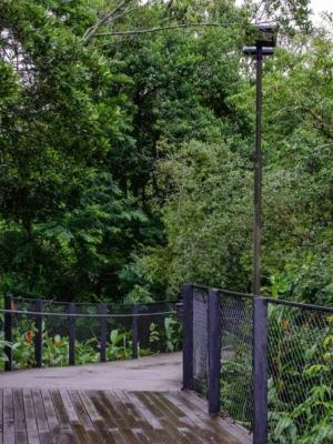 Projeto convida para uma caminhada no Córrego Grande, na Capital